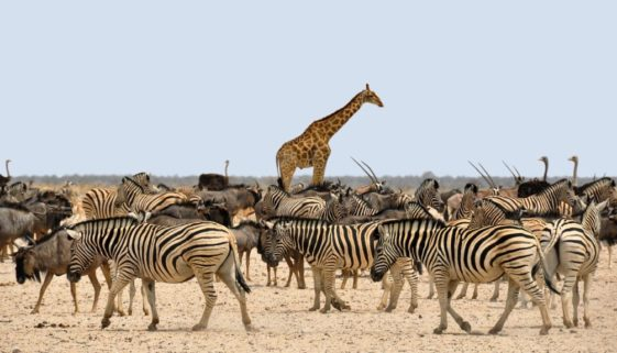 things to do in southern africa - safari in namibia
